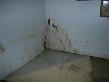 Мокрые стены в подвале